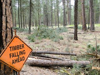 Camp Sherman thinning