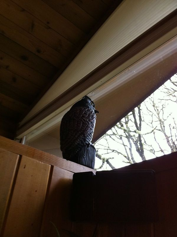 How we stopped a robin's pecking at window glass - HinesSight