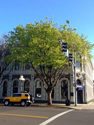 Salem U.S. Bank trees 2