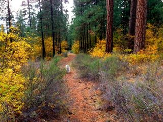 Metolius dog walk