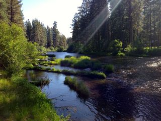 Metolius River near sunset