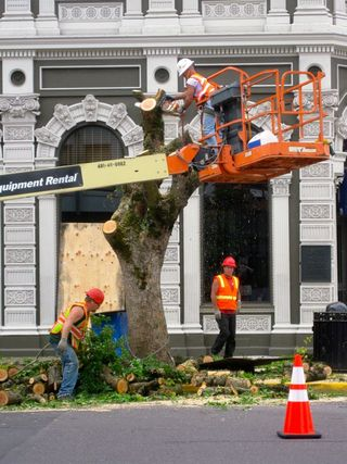 US Bank trees cut down