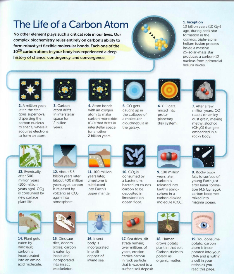 The Life of a Carbon Atom