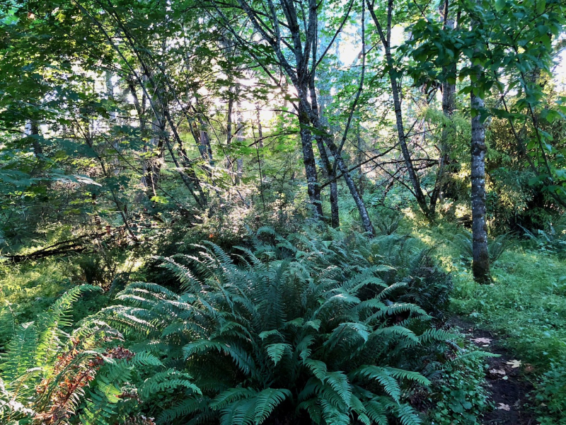 June ferns