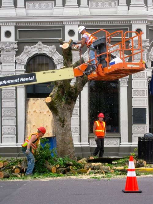 US Bank trees being killed