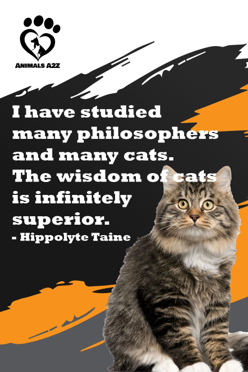 Wisdom of cats