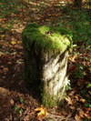 Moss_capped_stump