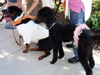 2006_salem_dog_parade2
