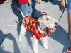 2006_salem_dog_parade6