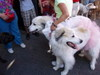 2006_salem_dog_parade7