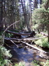 Fallen_logs_across_canyon_creek