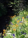 More_wildflowers_in_canyon_creek_me
