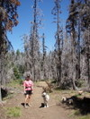 Start_of_canyon_creek_meadows_trail