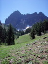 Three_fingered_jack_from_upper_mead