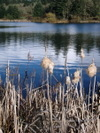 Last_years_cattails