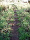 Well_trod_path