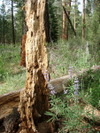 Metolius_decay_and_growth