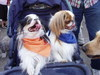 Baby_carriage_dogs