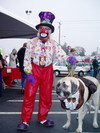 Clown_dog