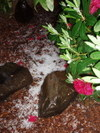 Hail_and_rhododendron_blossoms