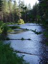 Late_afternoon_on_the_metolius