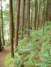 Little_north_santiam_trail