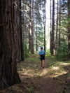 Metolius_forest_trail