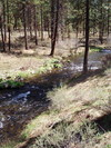 Metolius_river_in_front_of_cabin