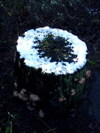 Snowy_stump_circle